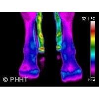 infraroodfoto koude voorbenen paard