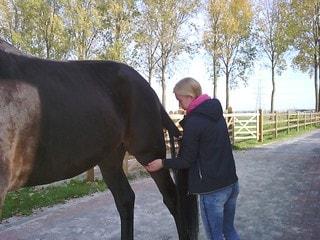paardenarts Rozanne Vermeulen